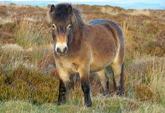 Exmoor horse riding holidays in South West England UK